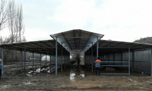 Söğüt Akçasu köyü fener çatılı açık besi barınağı